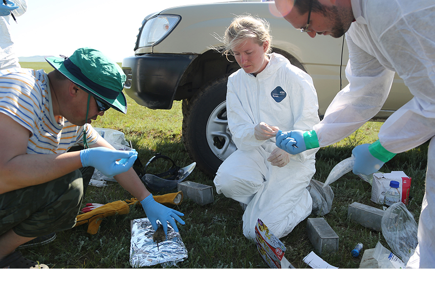 mongolia research