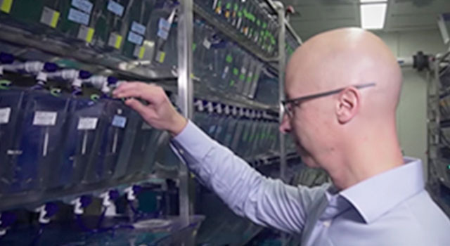 Heart Muscle Regeneration